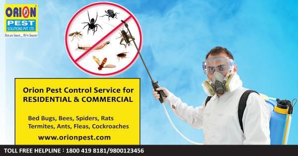 Pest control service in kolkata - pet services