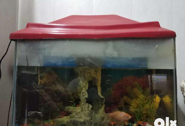 Aquarium and a fish