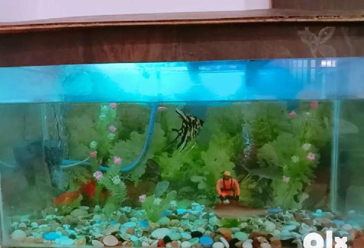 Aquarium fully reddy condition