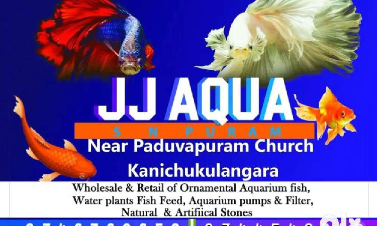 Aquarium and fish