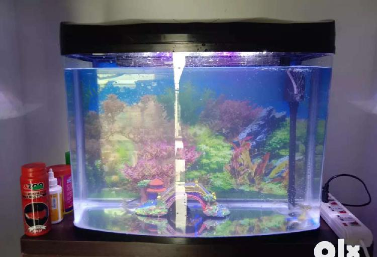 Attractive fish tank alongwith fish 5 months old only for 3