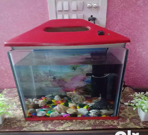 "Sell my fish aquarium for sell 12""/9""/12"""