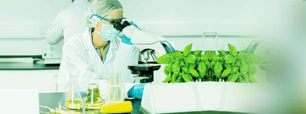 Herbal Extracts Supplier - skilled trade services