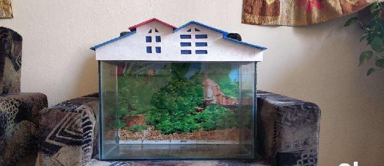 Aquarium tank accessories at reasonable prices. (check price