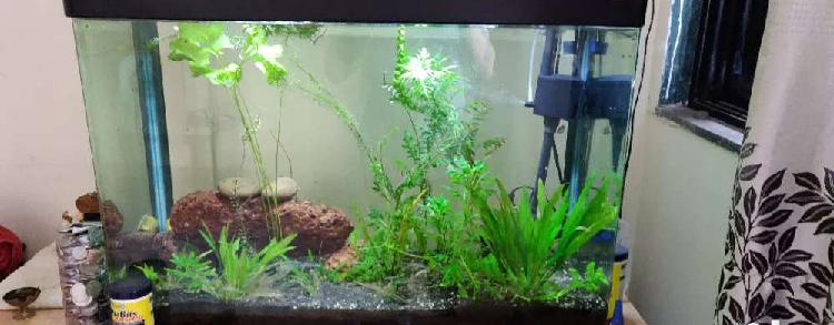 Planted aquarium with amazonia soil