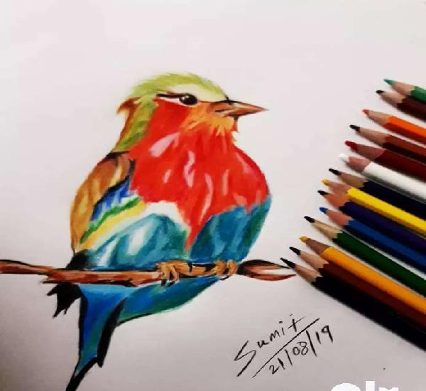 Amazing colourful premium color pencil bird