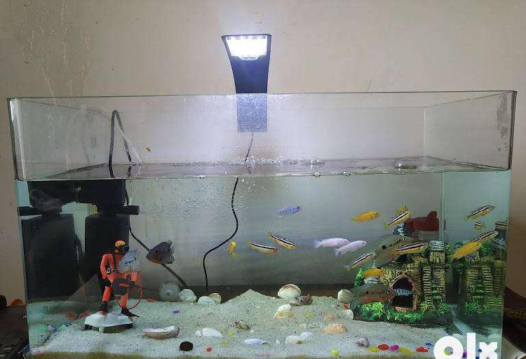 Curved plantation aquarium/tank, 2 months used with