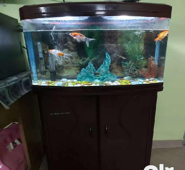 Minijang 2 feet aquarium
