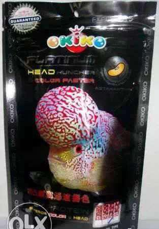 Okiko platinum head huncher colour faster flowerhorn fish