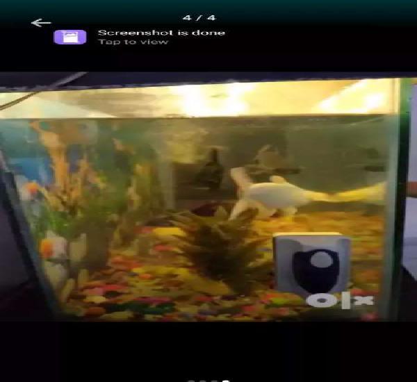 Indian fish aquarium