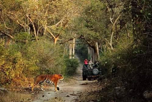 Jim Corbett National Park Packages - travel/vacation