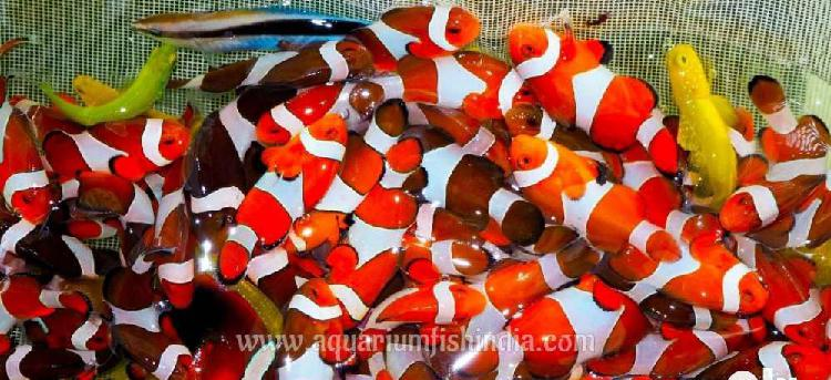 Stunning Collections Imported Marine Aquarium Fish Bulk