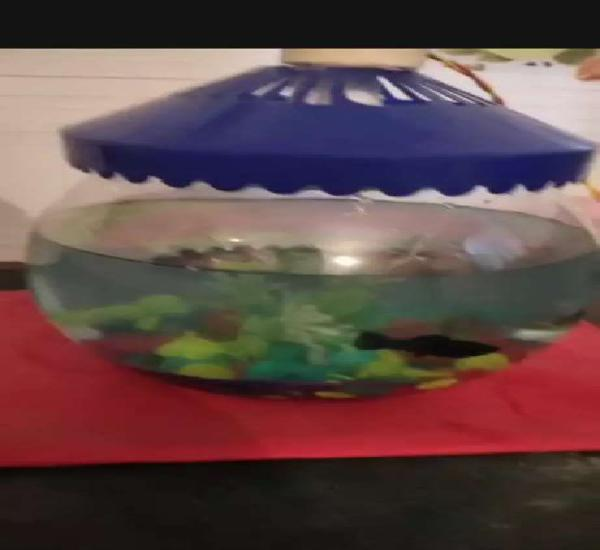 Urgent sell bowl with fishes and all accesories