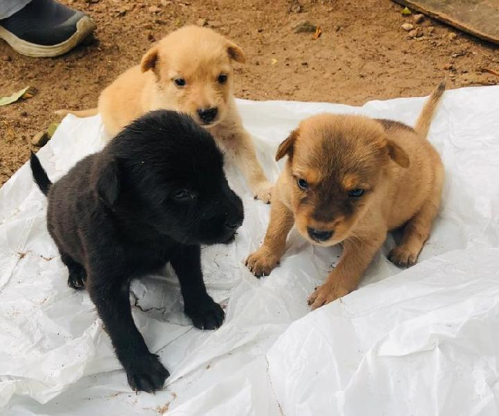 Puppies free adoption of pups in kochi ernakulam cochin