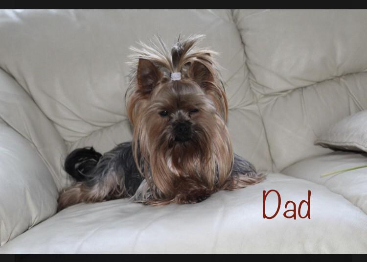 Trust kennel online pets shop yorkshire puppies for sale