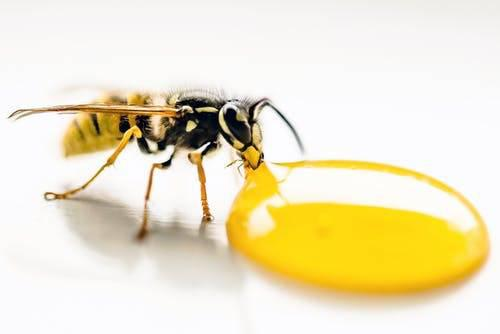 Pest control in faridabad - skilled trade services