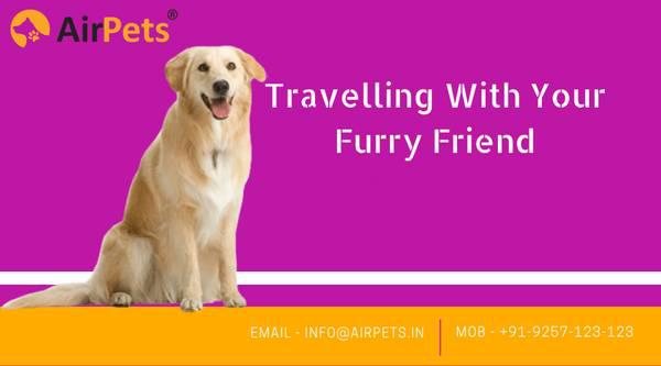 Pet transport services in india - pet services