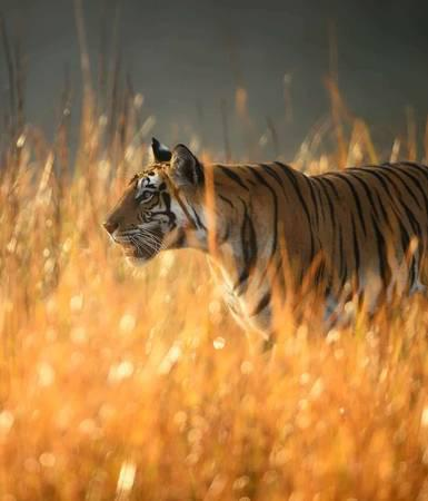 Ranthambore National Park India - travel/vacation services