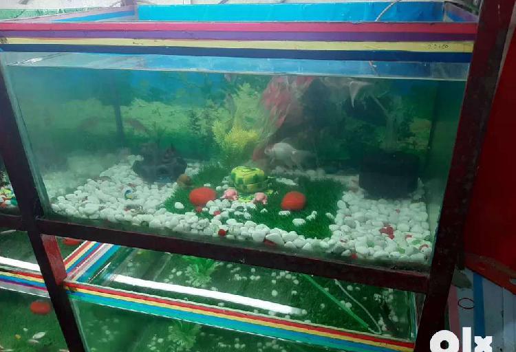 Rs 1999.excellent condition 2.5 fit aquarium. 1999.rs