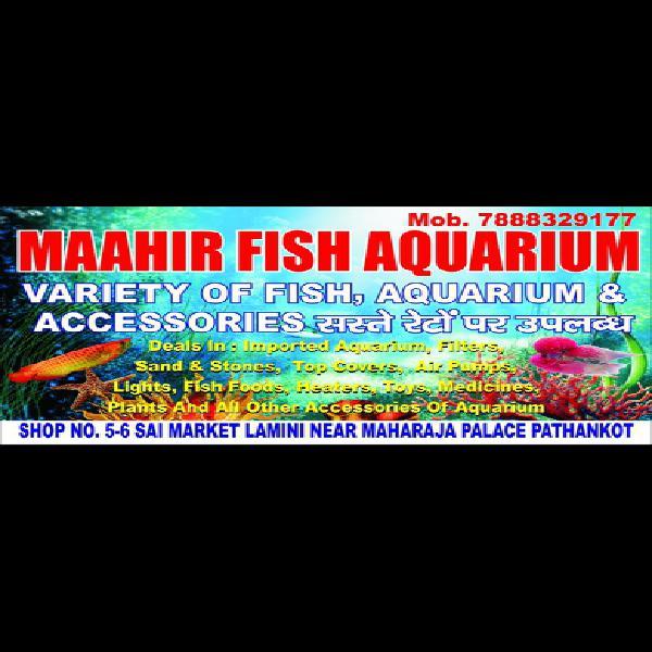 Fish Aquarium Types Ads November Clasf