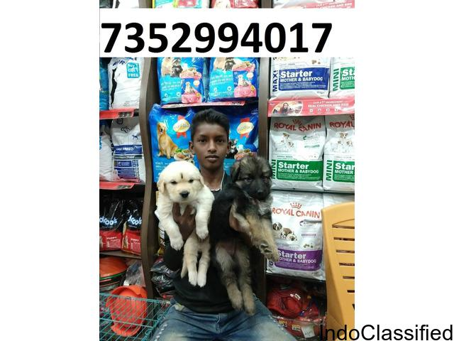 Pet dogs puppies at 7352994017