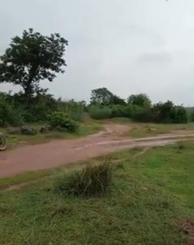 10 bigha agricultural land in nimtikari, kanksa, bardhaman,