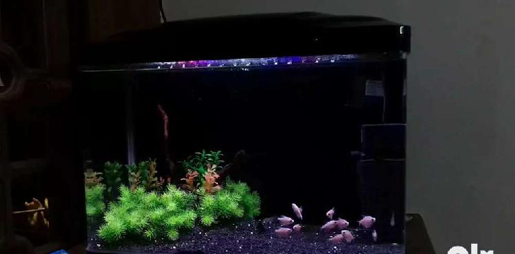 Aquarium full set
