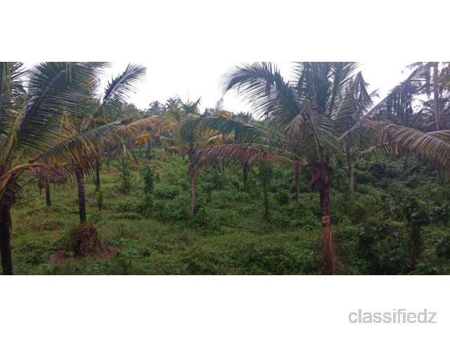 Plot for sale @ varkala thiruvananthapuram