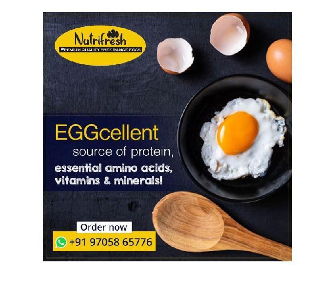 Nutrifresh eggs - organic and free range chicken farm in hyd