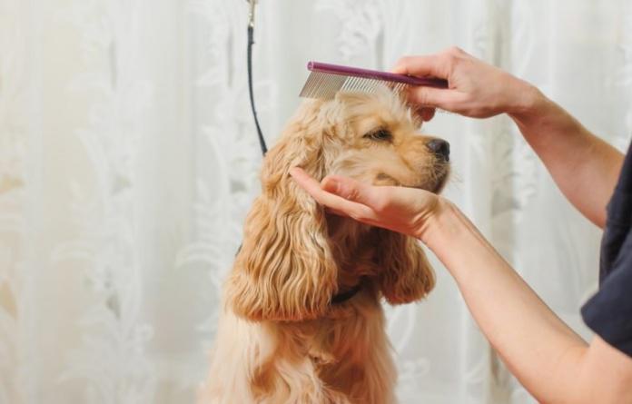 Premium pet grooming in bangalore