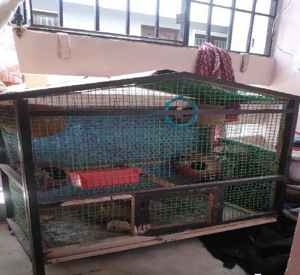 Love birds cage
