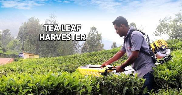 Best tea leaf harvester machine in india - farm & garden -