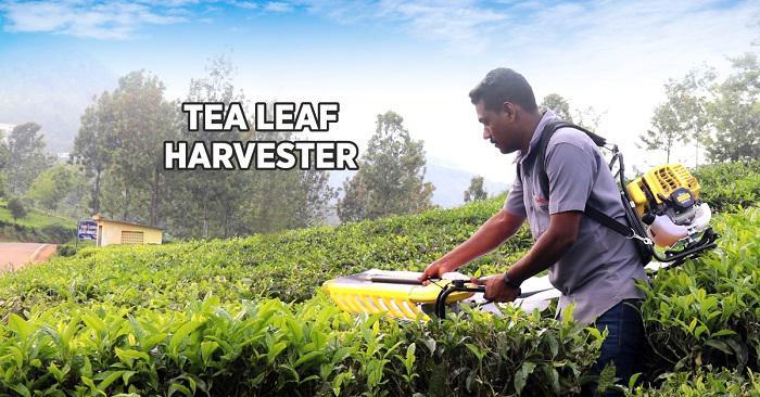 Best tea leaf harvester machine in india