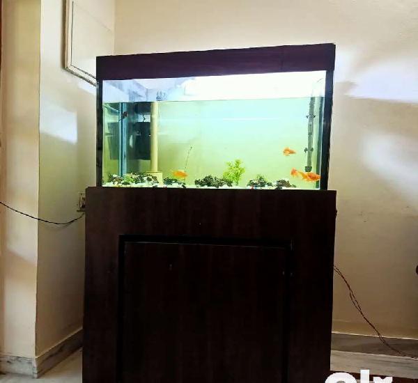 5*3 feet aquarium