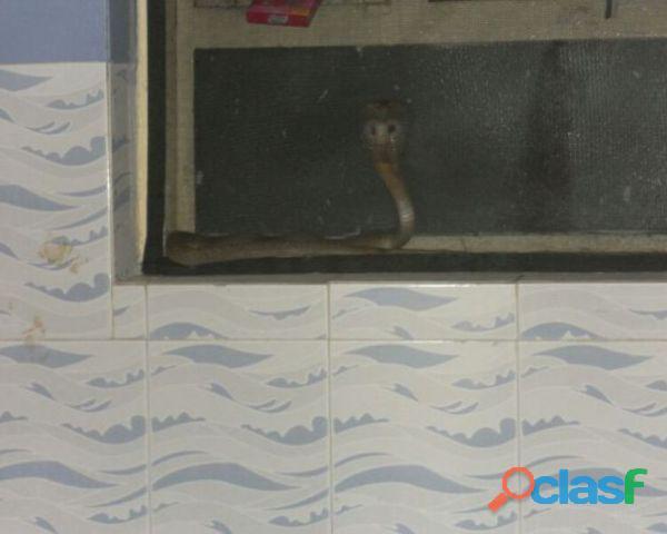 mosquito window net install at ariyankuppam 9788538852