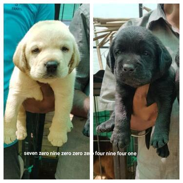 Snooker pups with top markings 7090004941